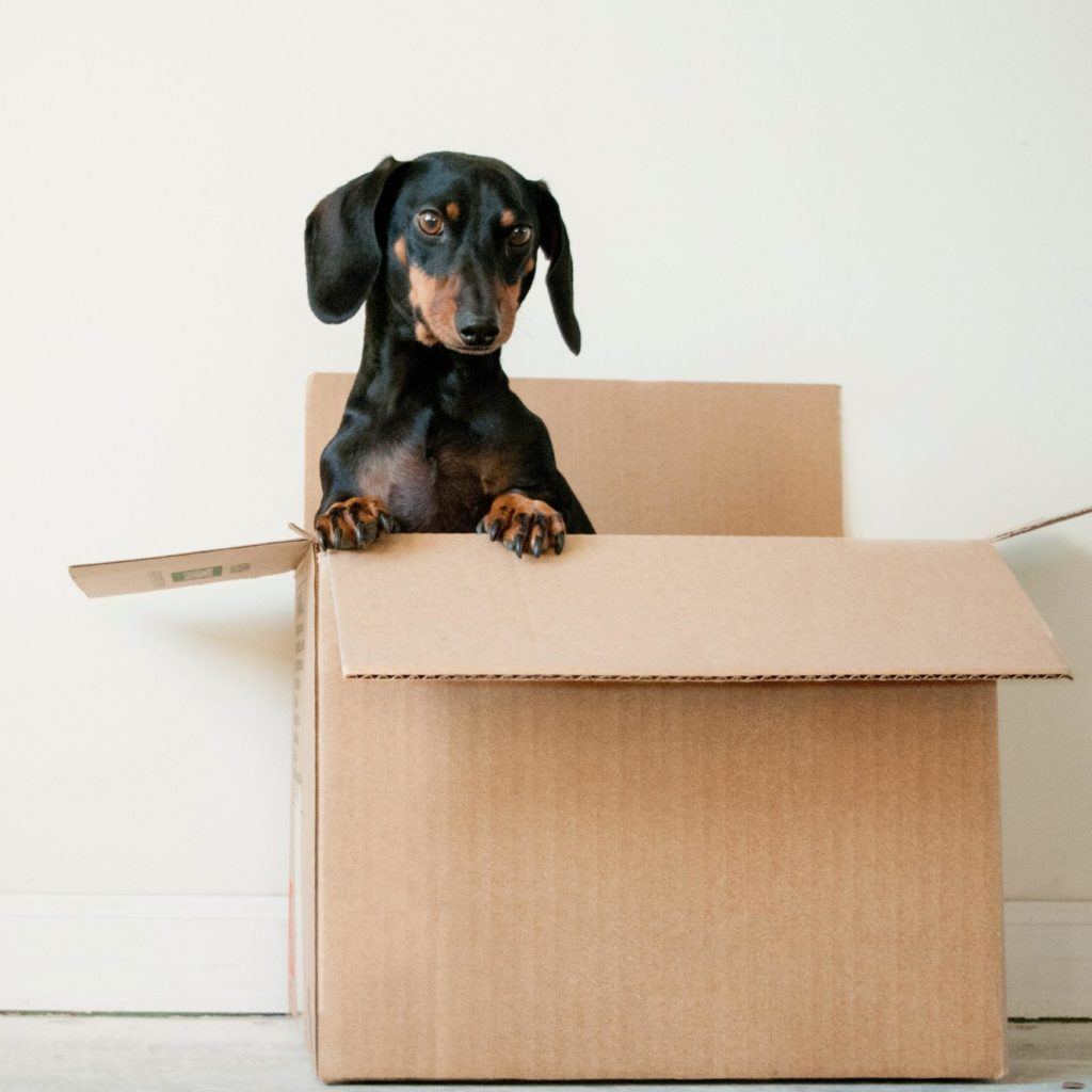 Photo of a dog in a box